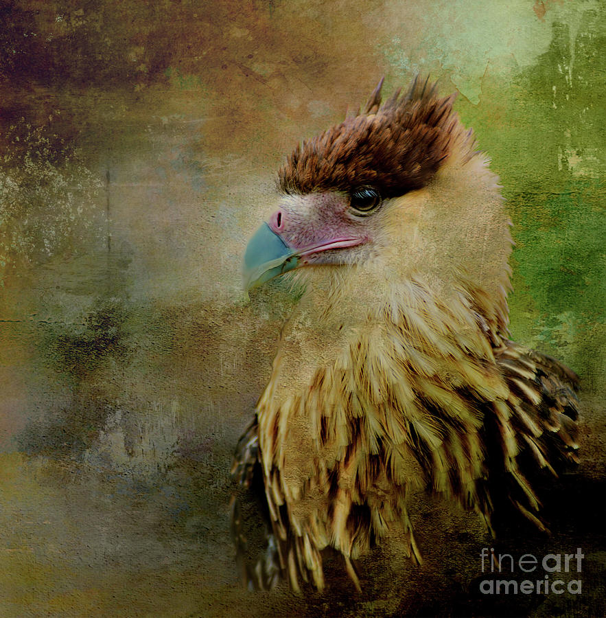 Portrait of a Young Caracara by Kathy Kelly