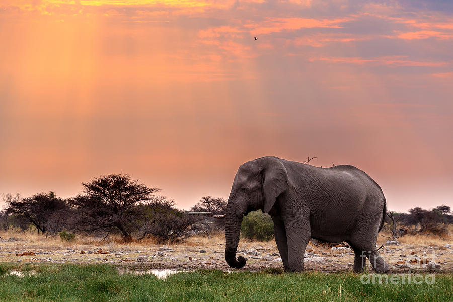 Love Photograph - Portrait Of African Elephants With Dusk by Artush