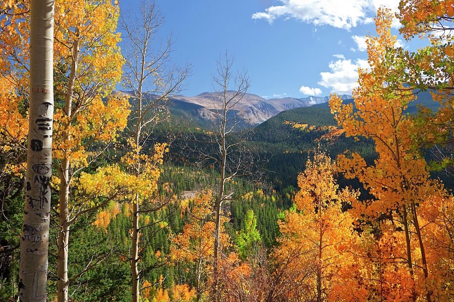 Portrait Of Colorado Landscape In Fall Photograph by Missing35mm