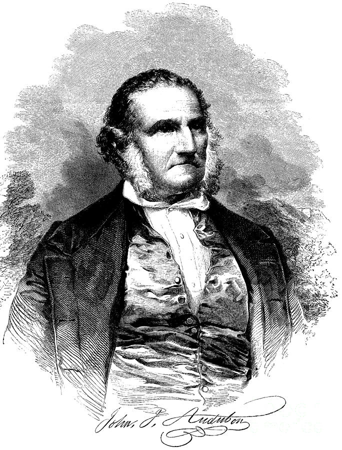 Audubon Drawing - Portrait Of John James Audubon  by American School