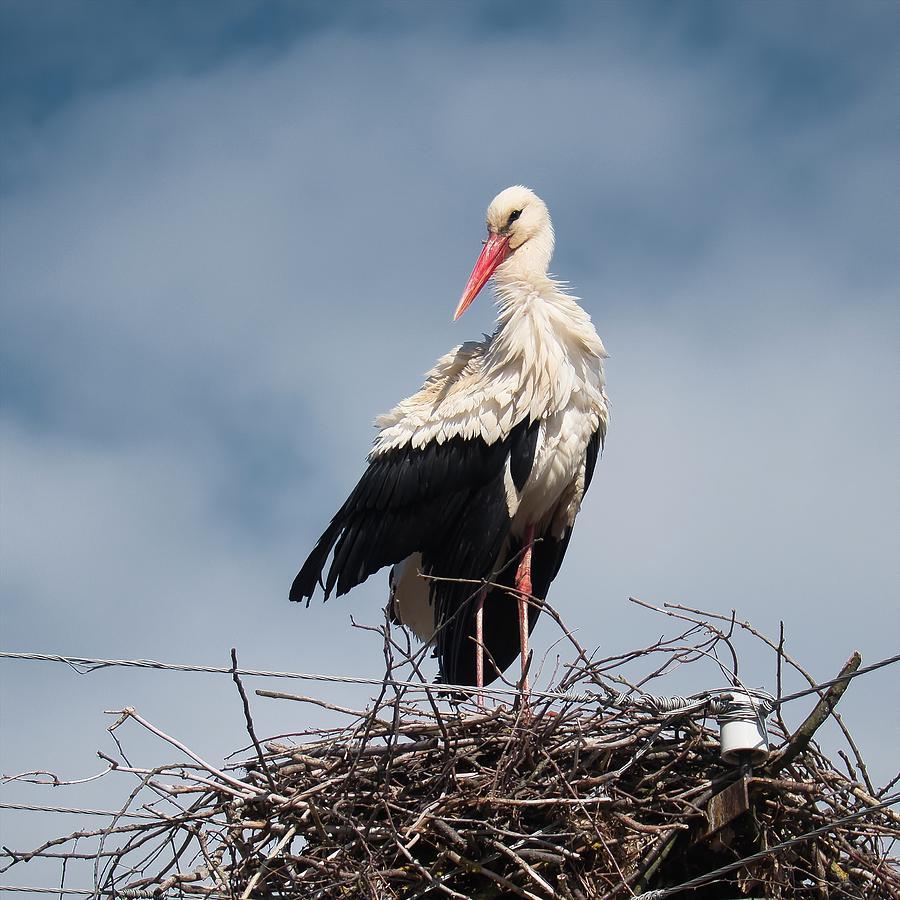 Portrait of stork. Horytsya, 2015. by Andriy Maykovskyi