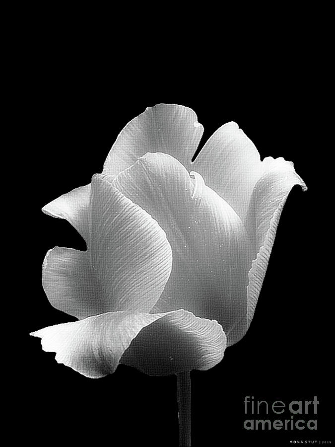 Nature Photograph - Portrait Of Tulip In Black And White by Mona Stut