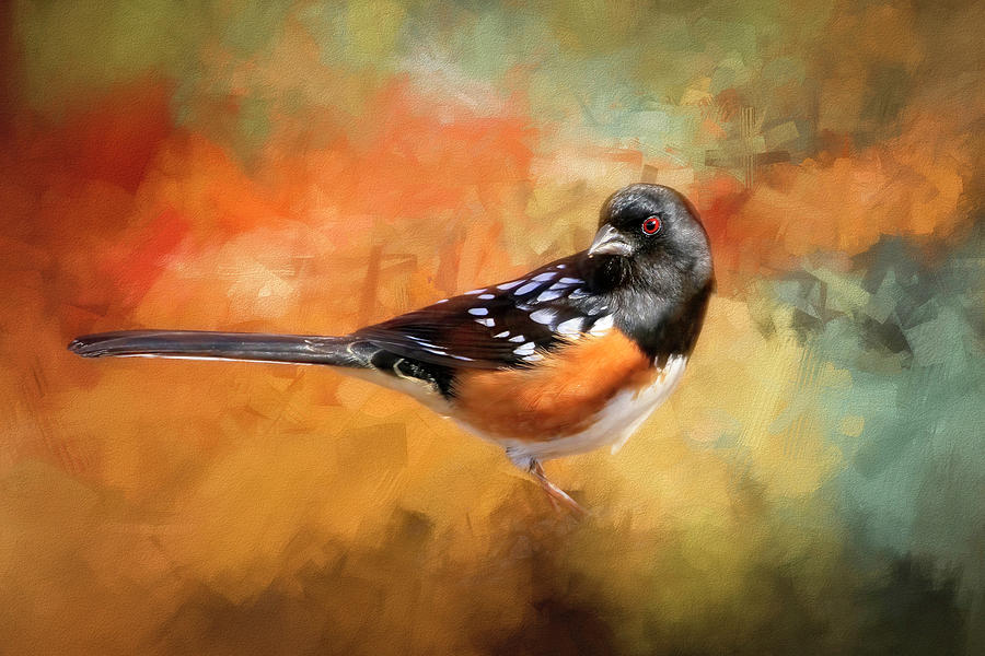 Spotted Towhee Photograph - Posing Spotted Towhee by Donna Kennedy