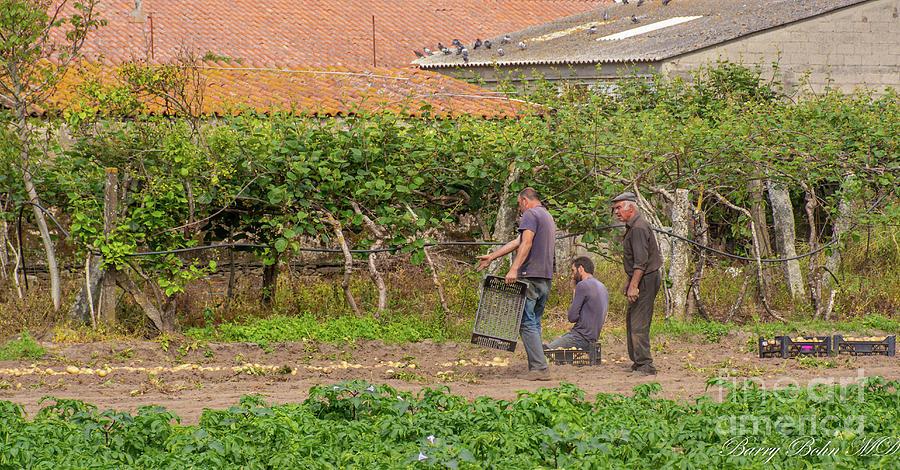 Potato farmers by Barry Bohn