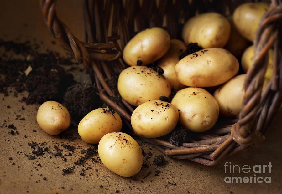 Basket Photograph - Potatoes In A Wicker Basket With Soil by Pinkyone