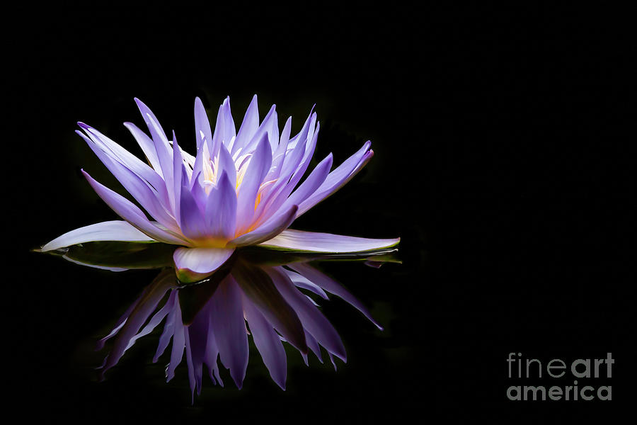 Powerful Purple Water Lily by Sabrina L Ryan