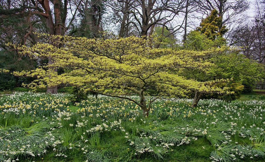 Powerscourt Gardens Ireland by Curt Rush