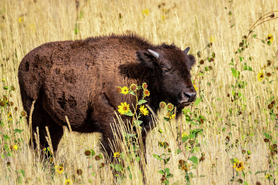 Prairie Colors by Michael Chatt