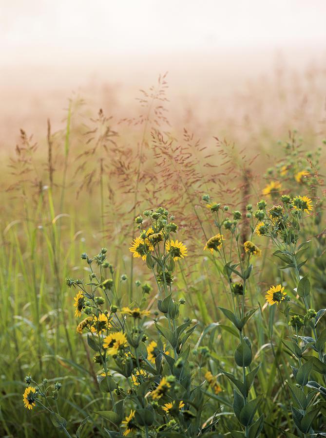 Prairie Fog by Robert Potts
