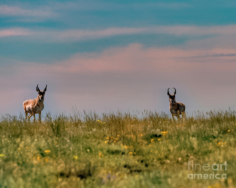 Prairie Scooters by Jon Burch Photography