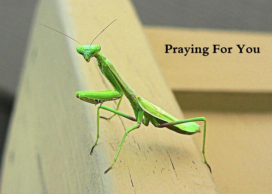 Praying Photograph - Praying Mantis For You by Kathy K McClellan