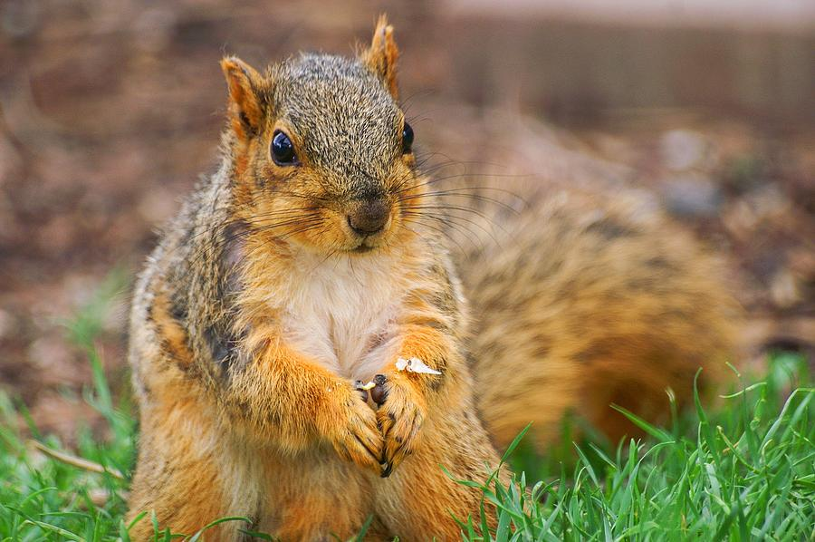 Praying Squirrel by Don Northup