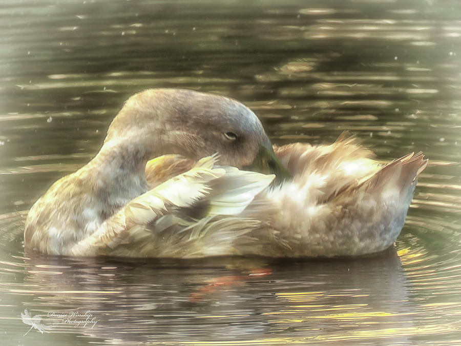 Preen After the Rain by Denise Winship