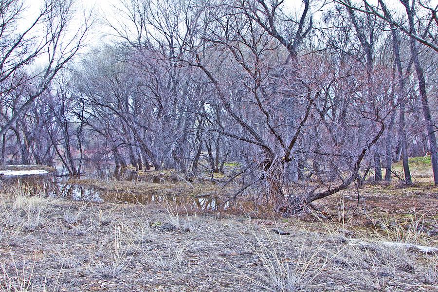 Prescott Arizona Watson Lake Bayou Trees Scrub Water Grasses 3142019 4916 Photograph by David Frederick