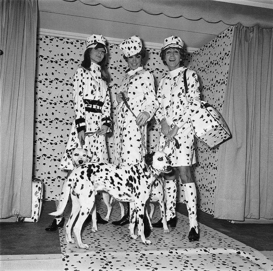 Presentation Of The New Dalmatian Photograph by Keystone-france