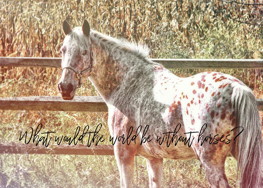 Horse Photograph - Pretty Appaloosa Quote by JAMART Photography