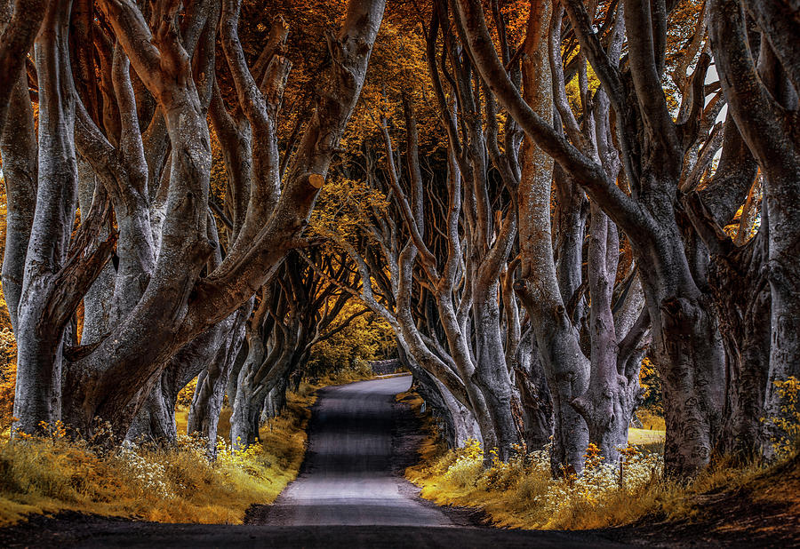 Pretty autumn in Dark Hedges by Jaroslaw Blaminsky