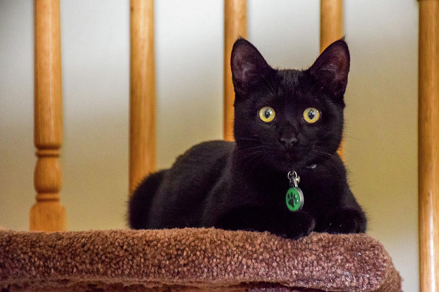 Pretty Black Kitten by Jack Peterson
