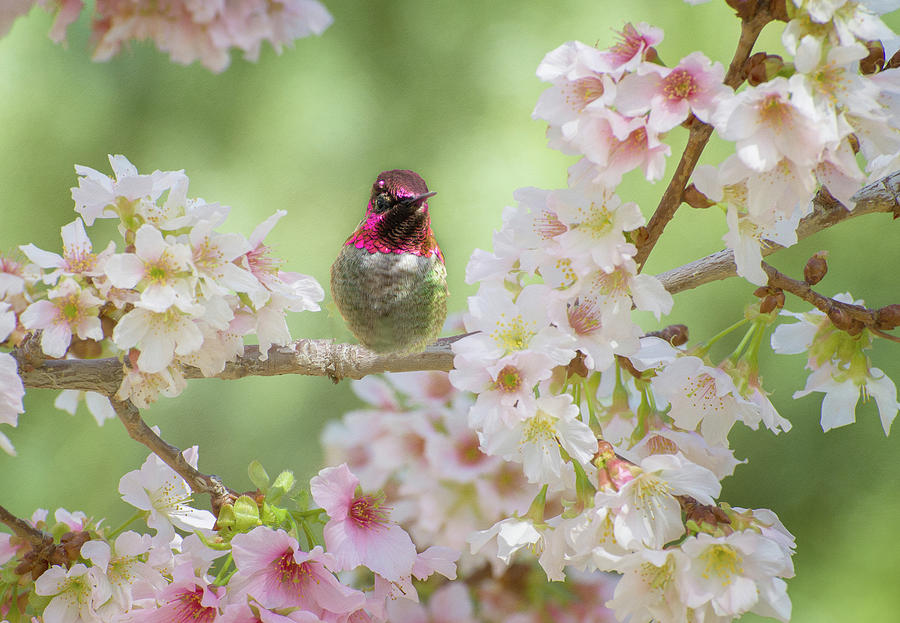 Pretty in Pink Blossoms by Lynn Bauer
