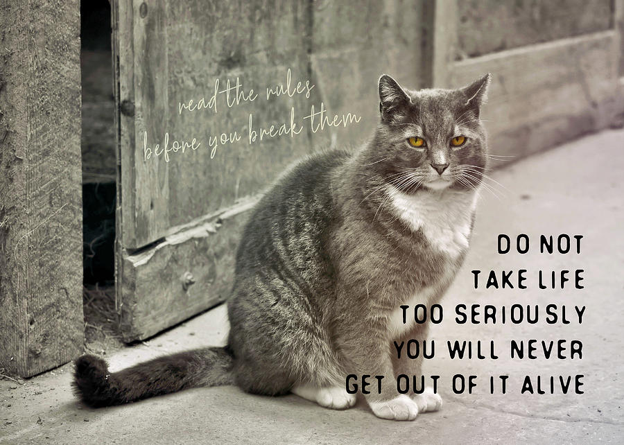 Cat Photograph - Pretty Kitty Quote by JAMART Photography