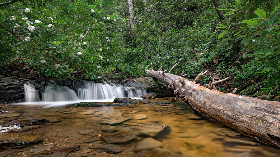 Pretty NC Scenic Creek by Patrick M Lynch
