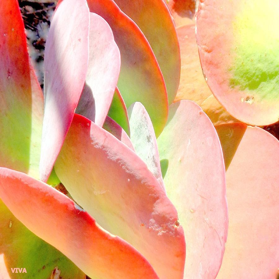 Pretty Pink Petals by VIVA Anderson