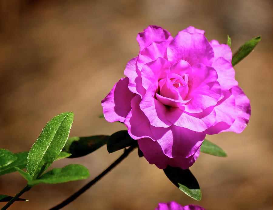 Pretty Purple Blooms by Angel Sharum