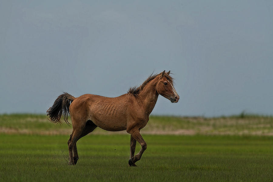 Pretty Wild Horse Showing Off Photograph