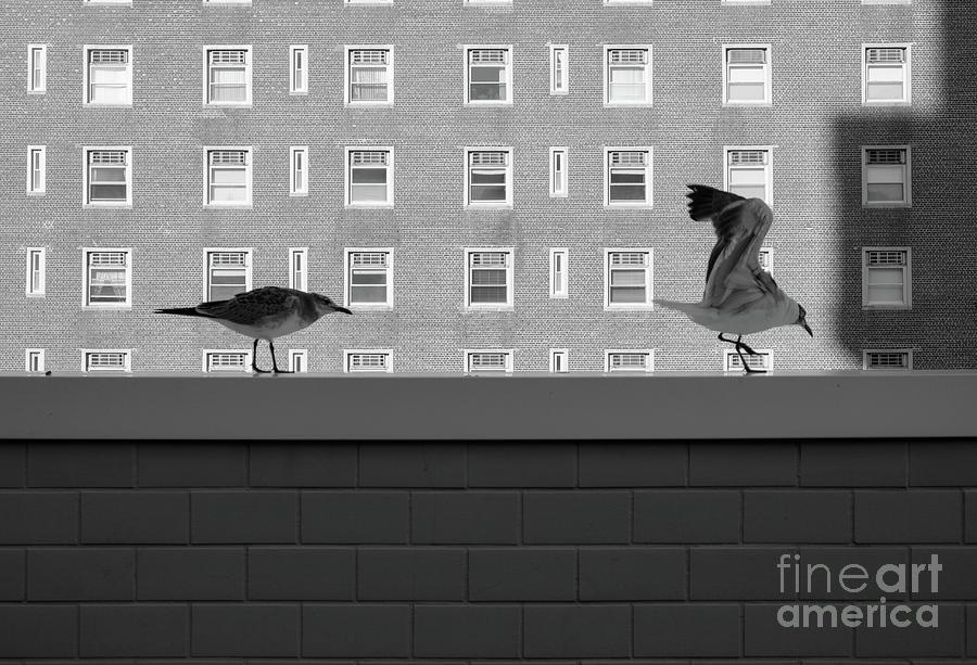 Urban Photograph - Prey by Len Tauro
