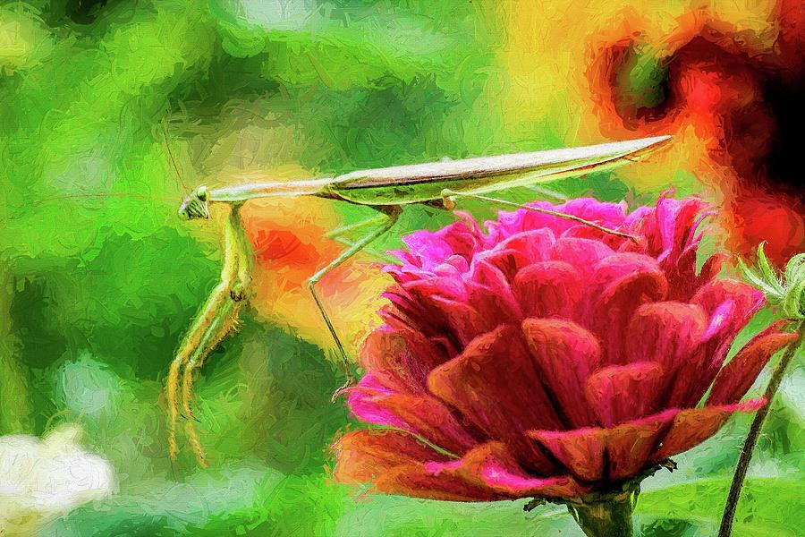 Preying Mantis Looking At You by Don Northup