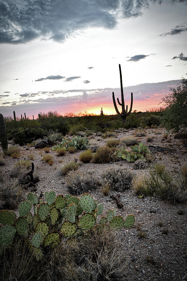 Prickly Pear and Saguaro during an Arizona sunset by Chance Kafka