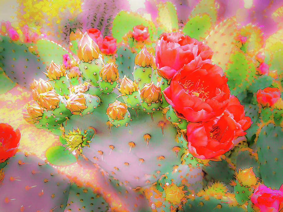 Prickly Pear Buds and Blooms by Veronika Countryman