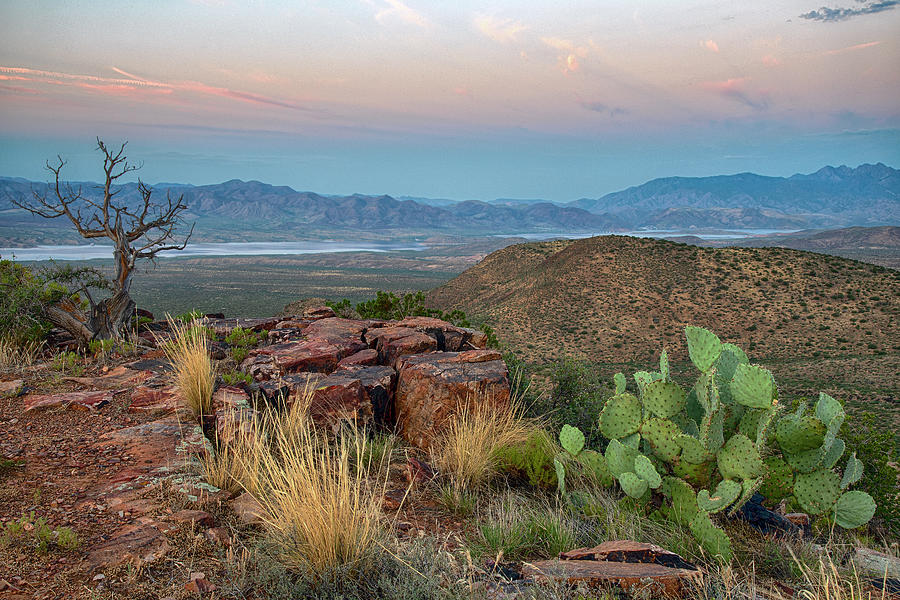 Prickly Pear Cactus at Sunrise by Dave Dilli