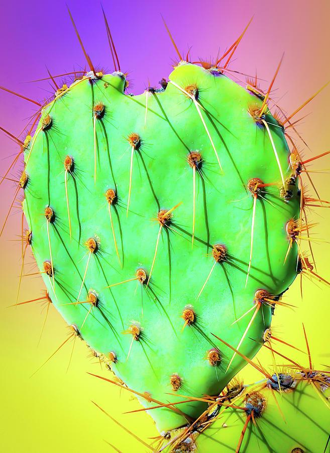 Prickly Pear Cactus Heart 2 by Veronika Countryman