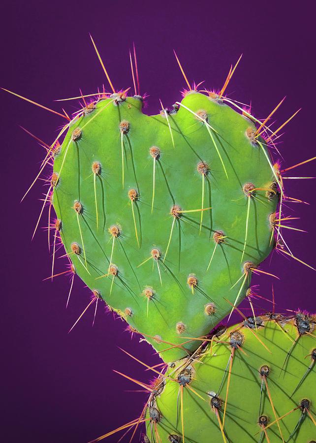 Prickly Pear Cactus Heart 3 by Veronika Countryman