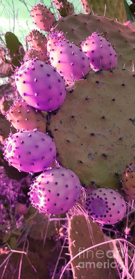 Prickly Pear Cactus Photograph - Prickly Pear Cactus by Paola Baroni