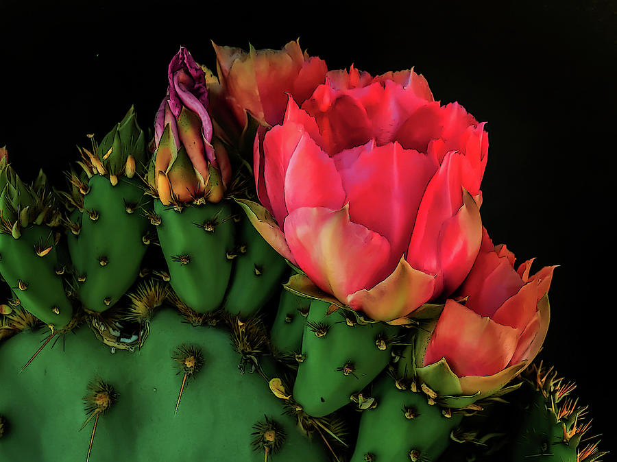 Prickly Pear Reds by Veronika Countryman