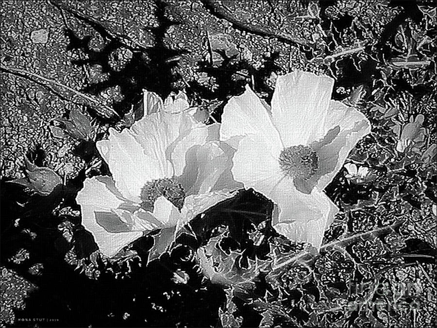 Prickly Poppies Bw Photograph