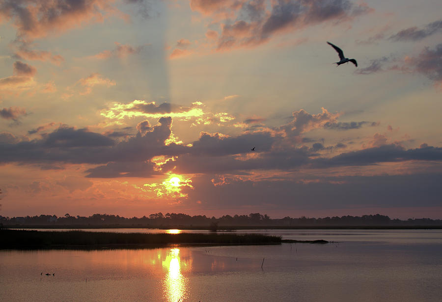 Prime Hook Sunrise 2 by Buddy Scott