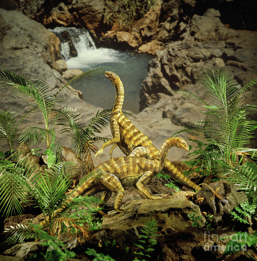 Primitive prosauropods by Warren Photographic