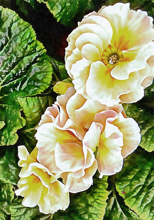 Primrose Glory by Dorothy Berry-Lound