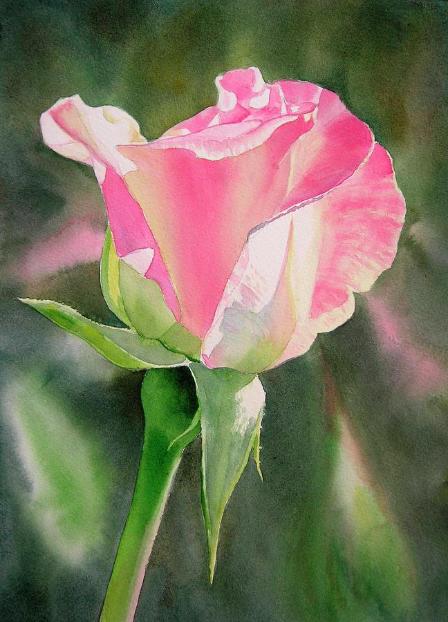 Rose Painting - Princess Diana Rose Bud by Sharon Freeman