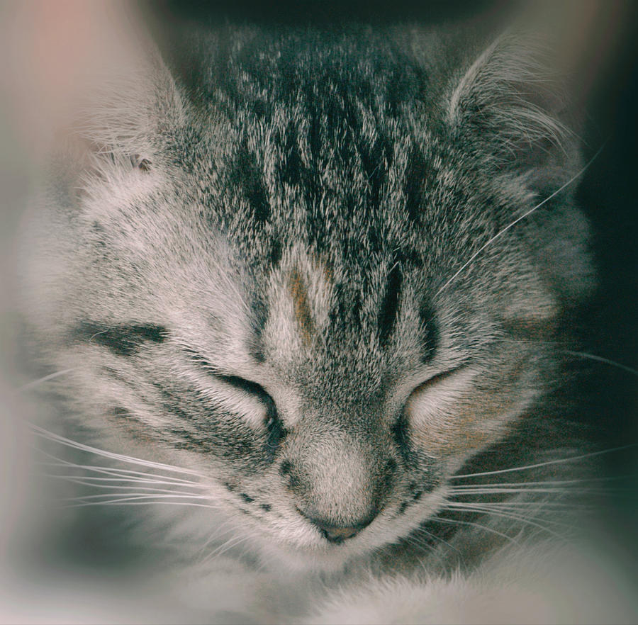 Princess Ruby Asleep by The Art Of Marilyn Ridoutt-Greene