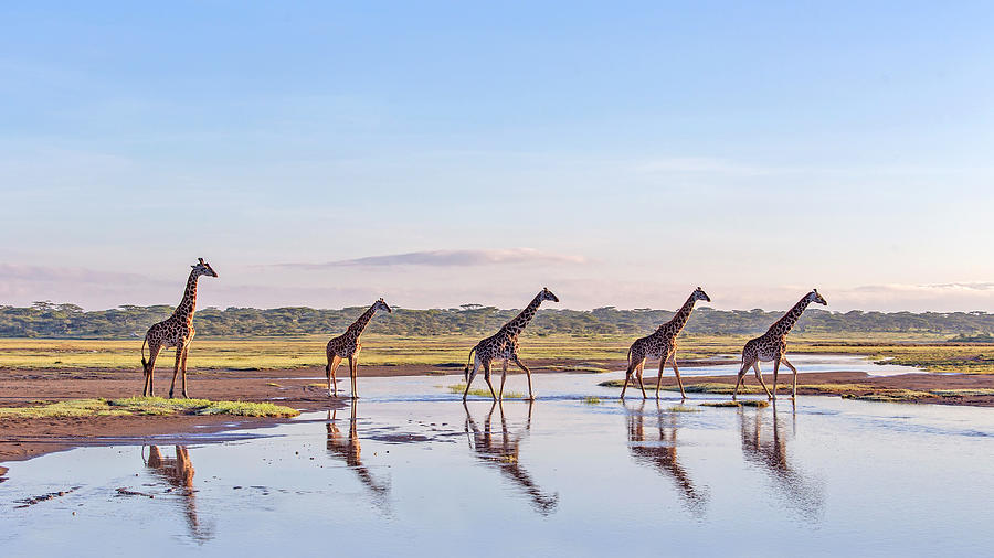 Wildlife Photograph - Procession by Alessandro Catta