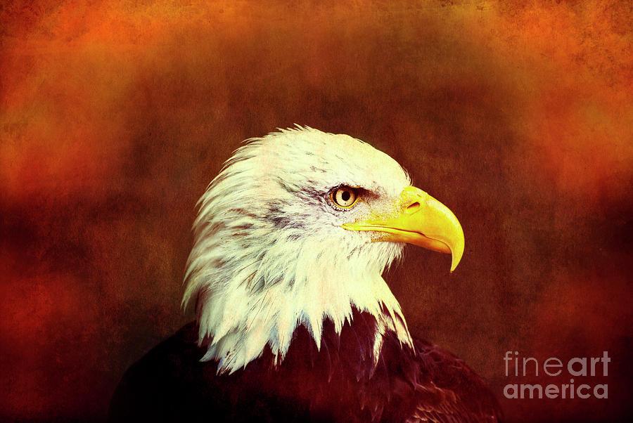 Profile Eagle Grunge Photograph by Zuberka