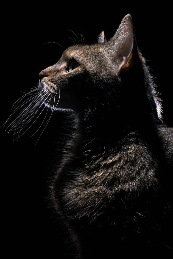 Profile Of A Cat Photograph by Nina Pearman