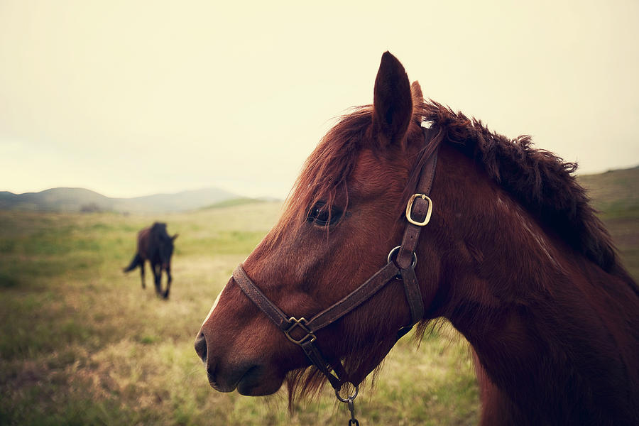 Profile Of Brown Horse In Meadow Photograph by Shari Weaver Photography