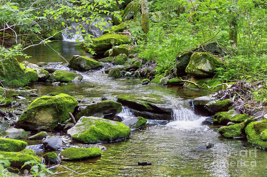 Profile Photograph - Profile Stream by James Foshee