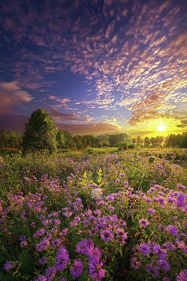 Promising A New Day by Phil Koch