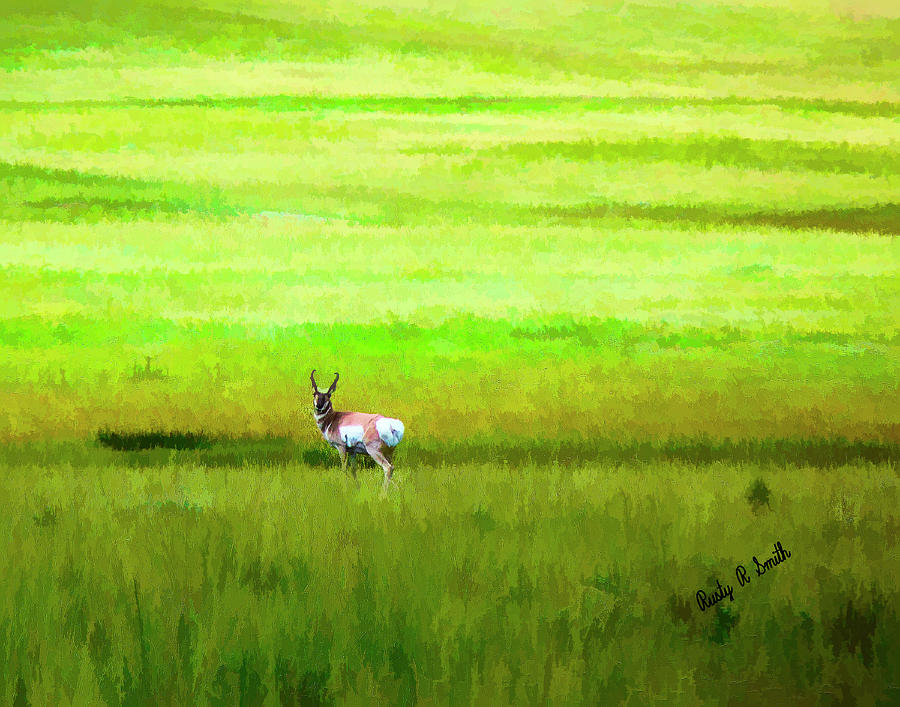 Pronghorn antelope in a sea of grass. by Rusty R Smith